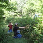 evan and owen picking blackberries along the path2