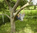 owen_apple_tree1.jpg