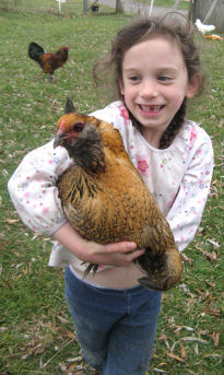 Deirdre holding Blackbeard, her second-favorite chicken!